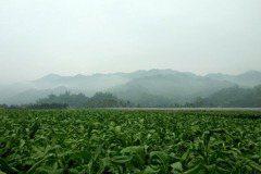 最後的美濃菸田:菸農與其社會文化的黃昏