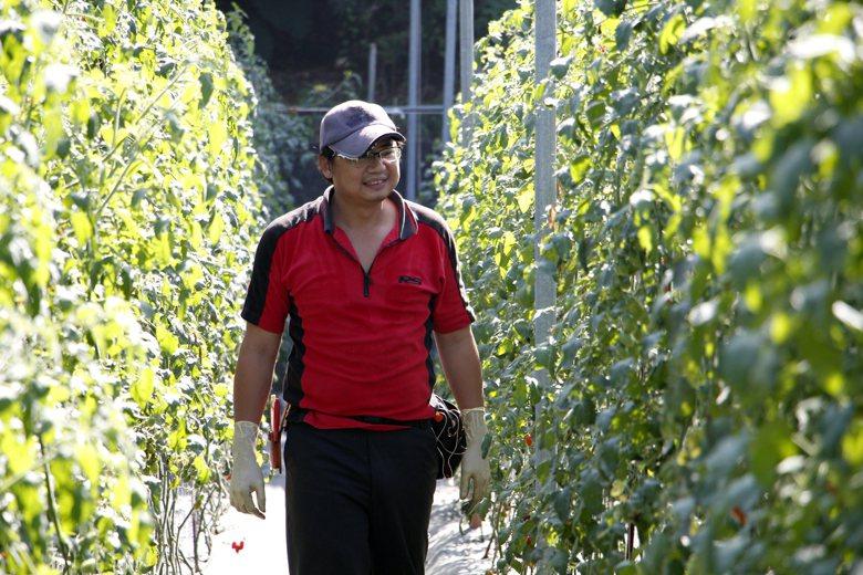 繽紛多樣的冬季裡作帶來不錯的經濟效益,讓年輕人有一條走回農村務農的新人生選擇。圖...