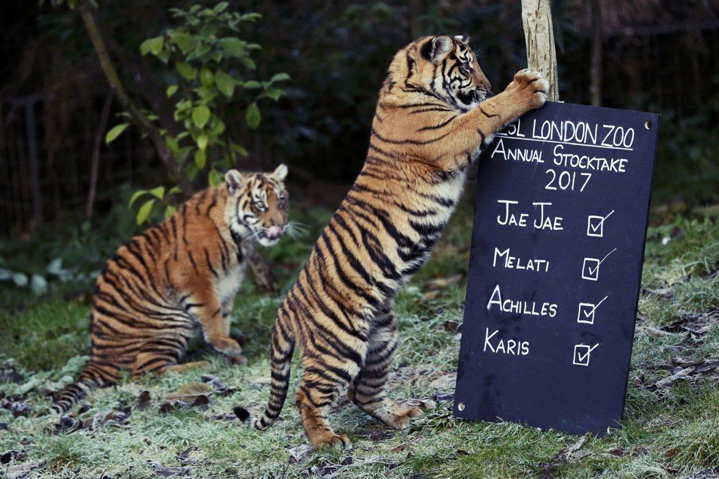 倫敦動物園的年度大盤點! 圖/路透社