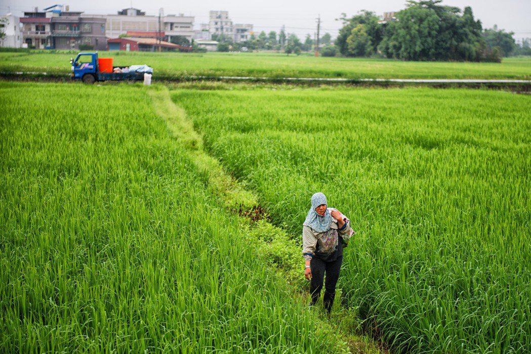 農業生產型態多元,到底是哪種農業生產缺工?缺哪種工?為何會缺工?這必須加以細究,直接引進外勞,這是最膝反射的思維。 圖/取自 Jorge Gonzalez(CC BY-SA 2.0)