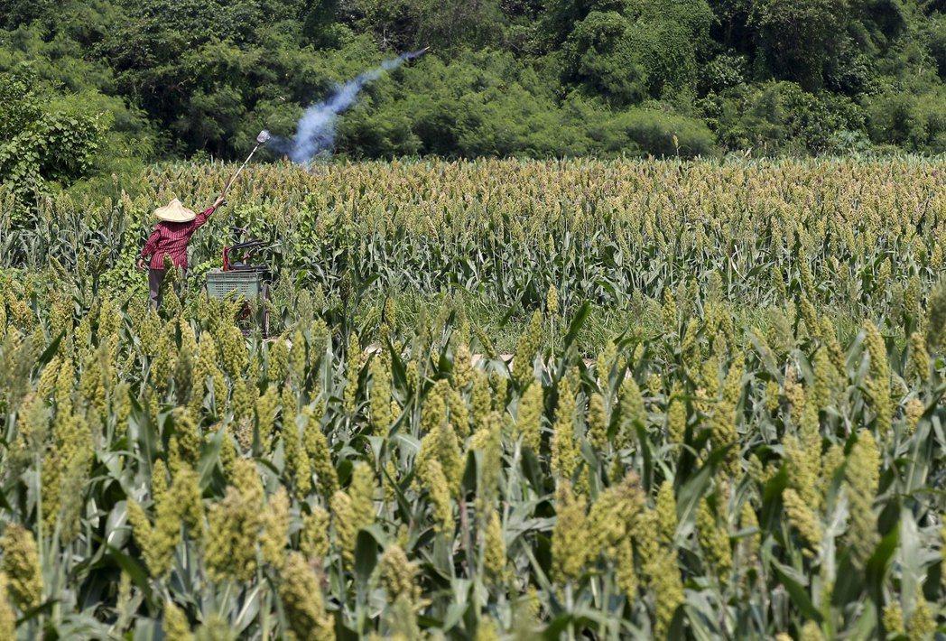 「單一企業雇主專屬」的獨佔外勞模式,必須通盤檢討是否有必要繼續存在,一旦此一模式直接嫁接在農業生產之上,恐怕將引發創造更嚴重龐大的人吃人機制。 圖/美聯社