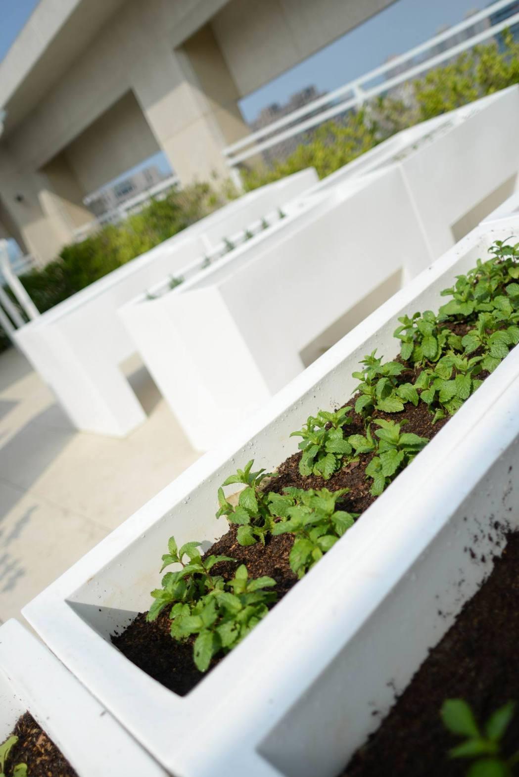 連種植栽的容器都是從國外購入。 圖片提供/振美建設
