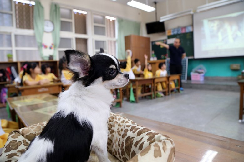 「友善校園」的經營重點在於情緒梳理,要將負向情緒排解出去,排解方法因人而異,而有關寵物的安定情緒功能,在心理學實驗驗證是呈現高度安撫效果,牠們的靜默與陪伴成了最好的傾聽者。 圖/新北市動保處提供