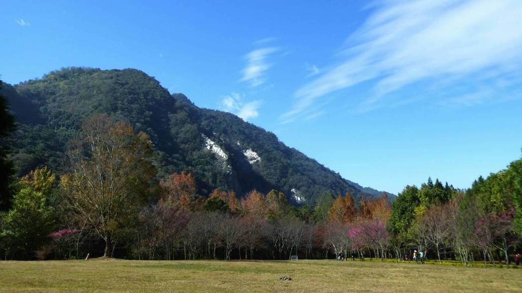 仁愛鄉奧萬大櫻花綻放,搭配藍天白雲和綠樹,美景如畫超吸睛。圖/南投林管處提供