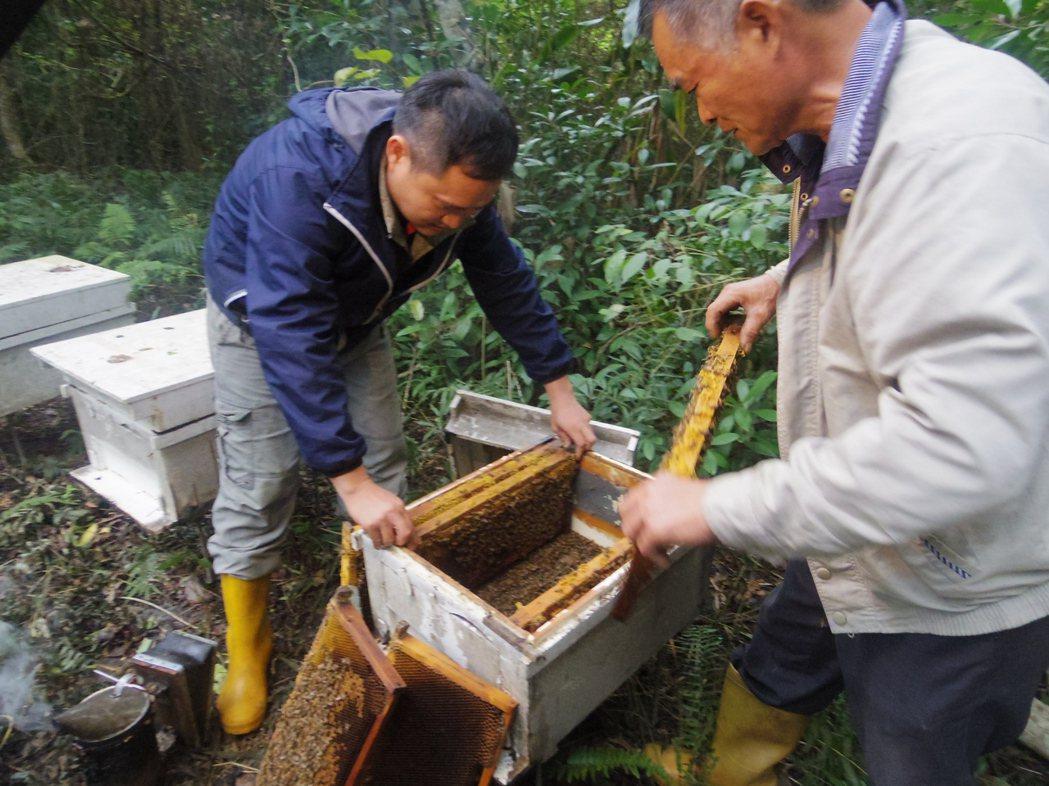 程家父子見辛苦養的蜜蜂被人用殺蟲劑毒殺,十分痛心。記者王思慧/攝影