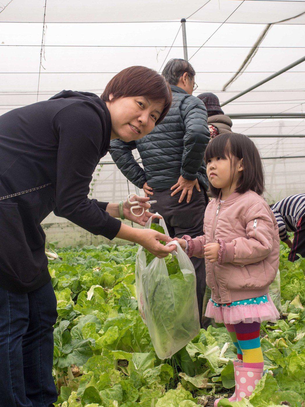 雖然江夏有機澄清有機蔬菜沒有滯銷,卻仍開放部份產區給民眾採摘。記者林良齊/攝影
