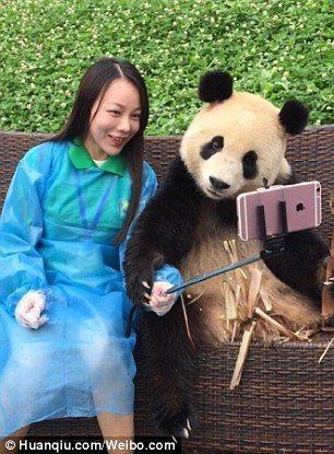 熊貓把手搭在遊客手上,乍看之下宛如牠「拿著」自拍棒與遊客自拍。(圖/英國每日郵報...