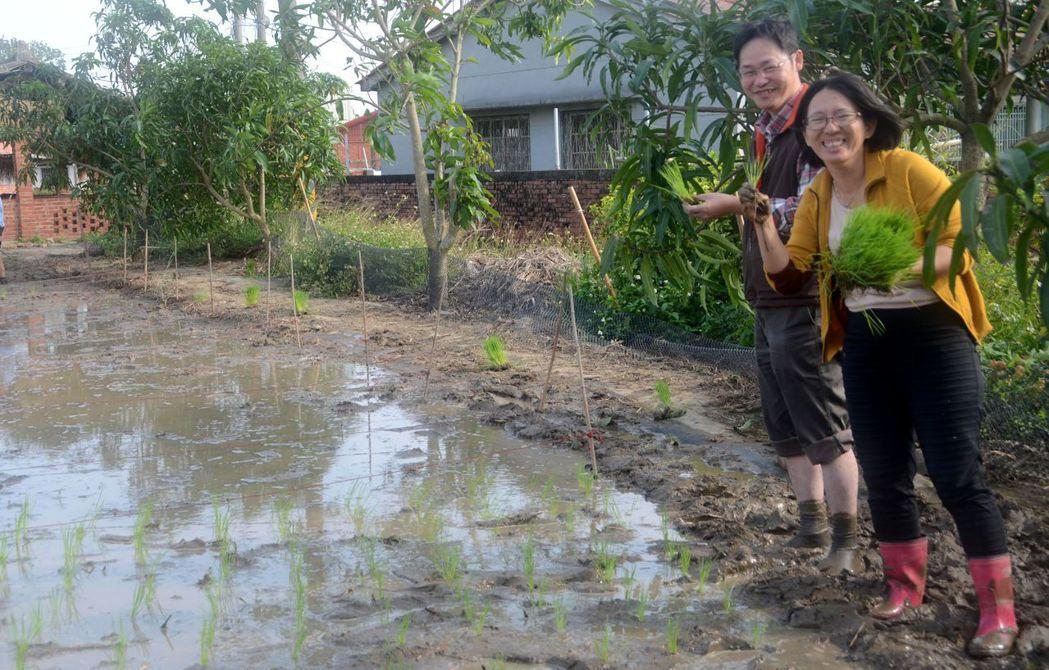 嘉?大???系教授?文理(左)及?米?稻米促????事?美雪指??生?稻的撇步。...