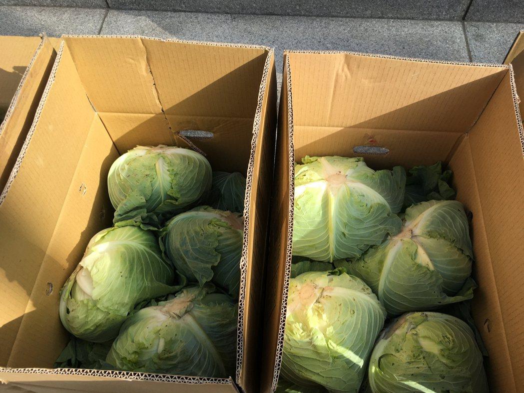 一??丽菜约20公斤丶10多颗,售价150元。图/台中市国民党团提供