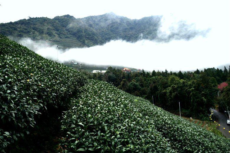 不同高山茶區之其間細緻的「山頭氣」差異,重新塑造了內銷時代的價格機制:以茶區、甚...