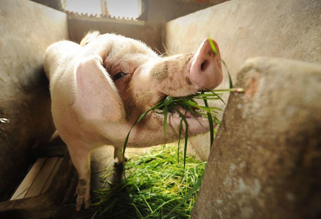 「吃素救地球」、「周一無肉日」:究竟減少肉食攝取,可以對環境有哪些助益? 圖/法...