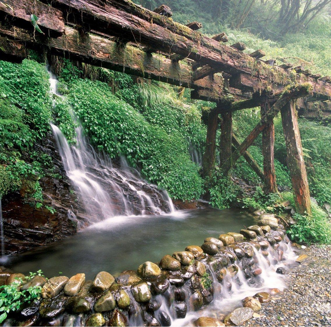 春節假期以阿里山、太平山及武陵等國家森林遊樂區遊客人數最多。圖/林務局提供