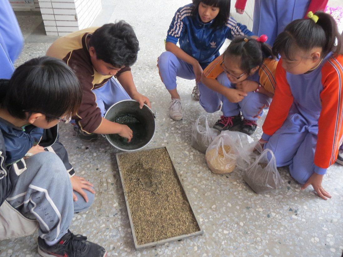 莊沂璋教導同學們用育苗盤放入篩好的泥土,灑上稻穀,培育水稻秧苗。