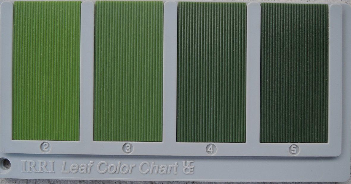 「水稻葉色板」,一般用稻子葉片顏色深淺來判定稻株營養狀況,再調整肥料用量,然而不...