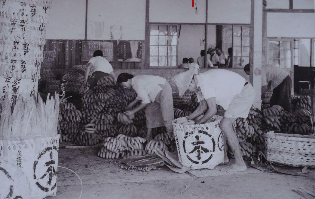 台中第二市場走過百年,推出老照片展;圖為1950年代市場香蕉批貨。記者洪敬浤/翻...