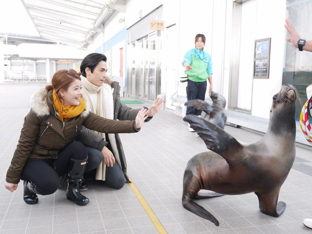 王樂妍、Gino為「我的老師叫小賀」到仙台水族館取景,戲中和海獅互動。圖/民視提...