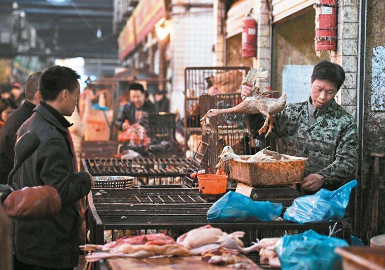 大陸處於H7N9流感嚴峻高峰期,疾管署呼籲,民眾前往旅遊洽公,宜避免接觸禽鳥類與...