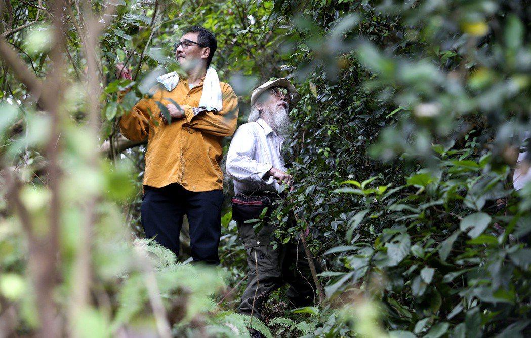 國立自然科學博物館研究員楊宗愈博士(左)與茶花專家李士林(右)在屏東來義鄉山區找...