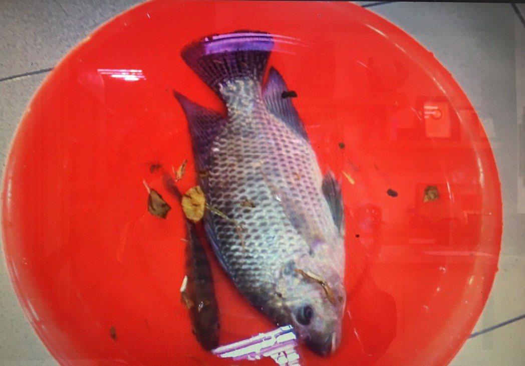48歲的王姓男子在屏東公園水池釣魚遭員警當場查獲。記者林良齊/翻攝