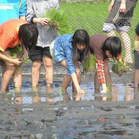 宜蘭縣政府舉辦千人插秧,邀請大家到綠博園區種稻。圖/陳文連提供
