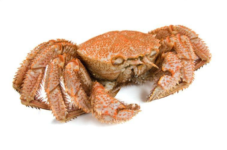 螃蟹+柿子=中毒 須用「藕節」破解?螃蟹與柿子搭配,謠傳可能中毒且造成腸壞死...