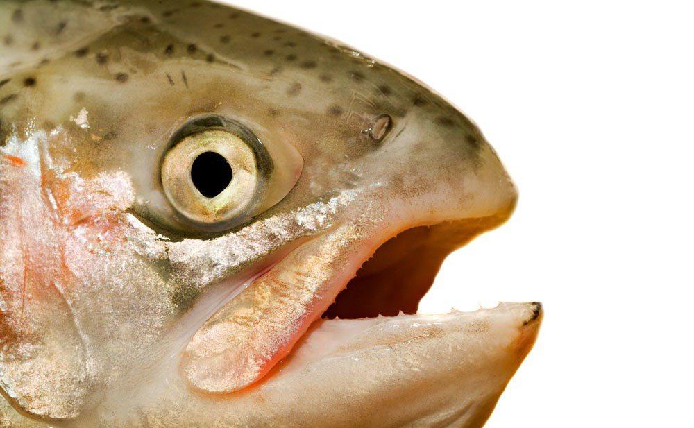 專攻智慧水質監控與服務商的誠映公司,透過國外競賽逐步展露頭角,成功吸引水產養殖業...
