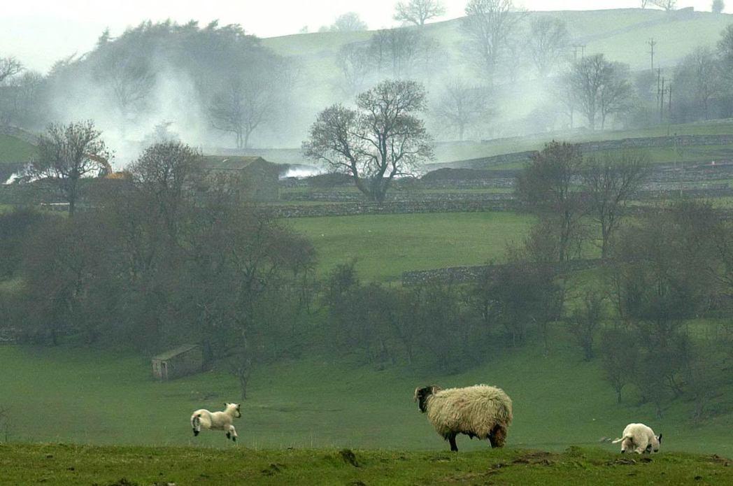 位在英格蘭東北的約克夏,便是羊毛業的重鎮。 圖/法新社