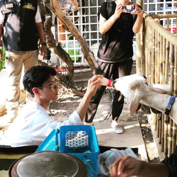 朴寶劍餵羊的模樣,讓許多粉絲們都直呼這羊好幸福! 圖/擷自推特