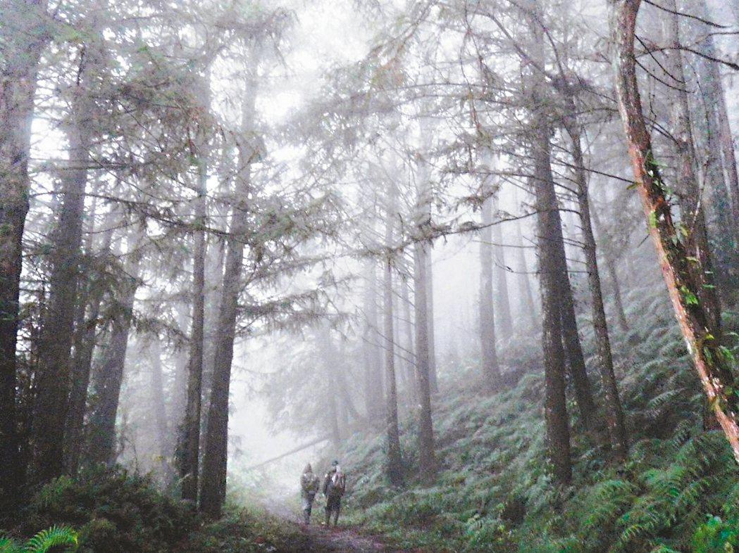 山老鼠盜採林木防不勝防,林務局今年首次招募森林調查監測志工,協助山林巡護、不法案...