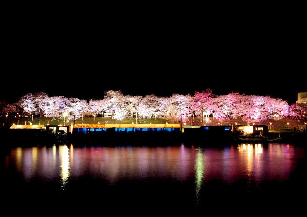 白石川堤櫻花夜景。圖/VISIT東北提供
