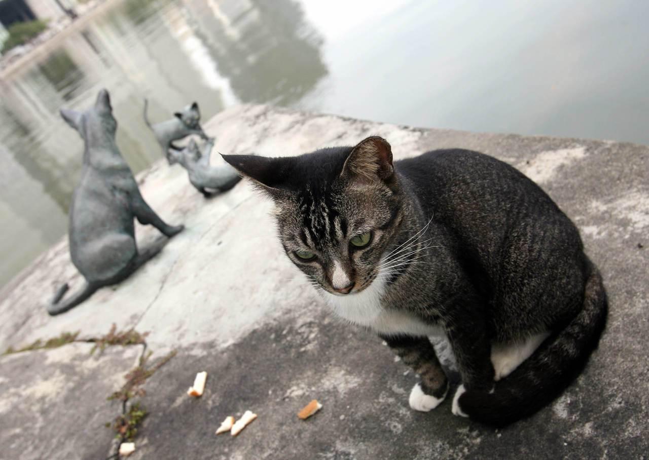 猫狗的确是这个城市中少见的动物。图为一只野猫坐在新加坡猫(kucinta)的雕像...