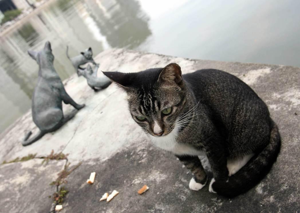 貓狗的確是這個城市中少見的動物。圖為一隻野貓坐在新加坡貓(kucinta)的雕像...