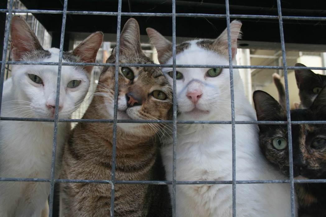 圖為新加坡一間大型庇護所,收容超過1,400隻貓。據估計新加坡約有6萬多隻流浪動...