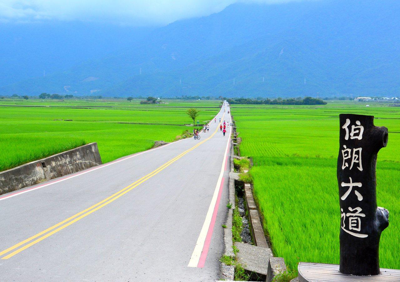 因廣告而一砲而紅的伯朗大道。圖/台東縣政府提供
