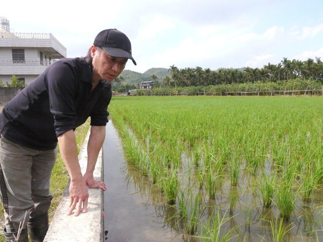 他種植這東西 讓水稻與福壽螺和平共處