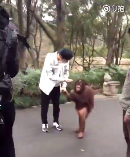 鹿晗牽著猩猩。 圖/擷自秒拍