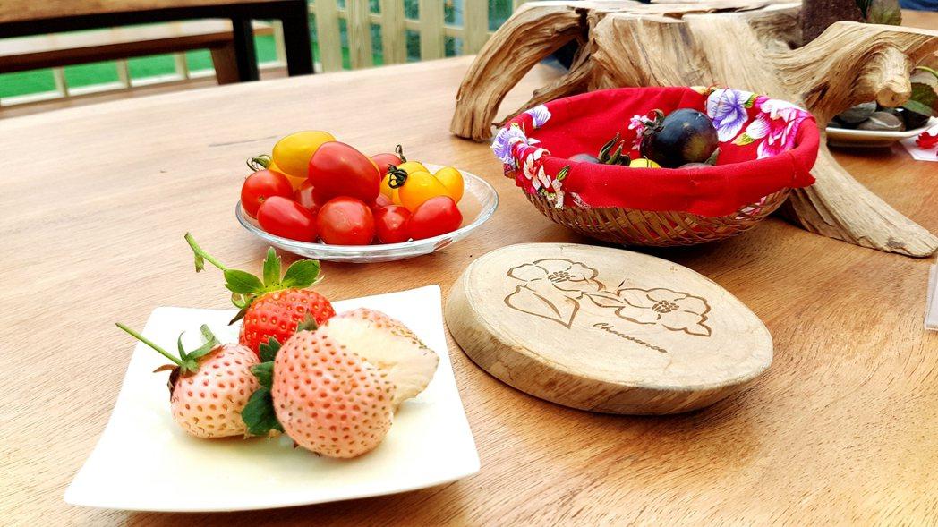 白草莓肉質綿密,嘗來有一股初戀滋味。記者吳佩旻/攝影