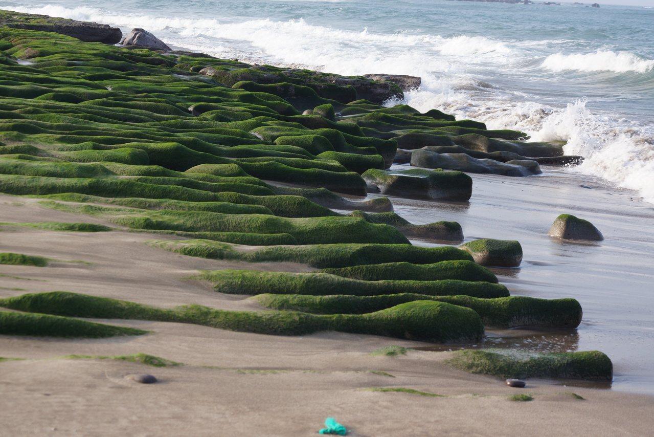 大屯火山噴發遺留的火山岩,長期受海浪侵蝕成縱向溝槽,春天覆蓋整片海藻,就成了知名...