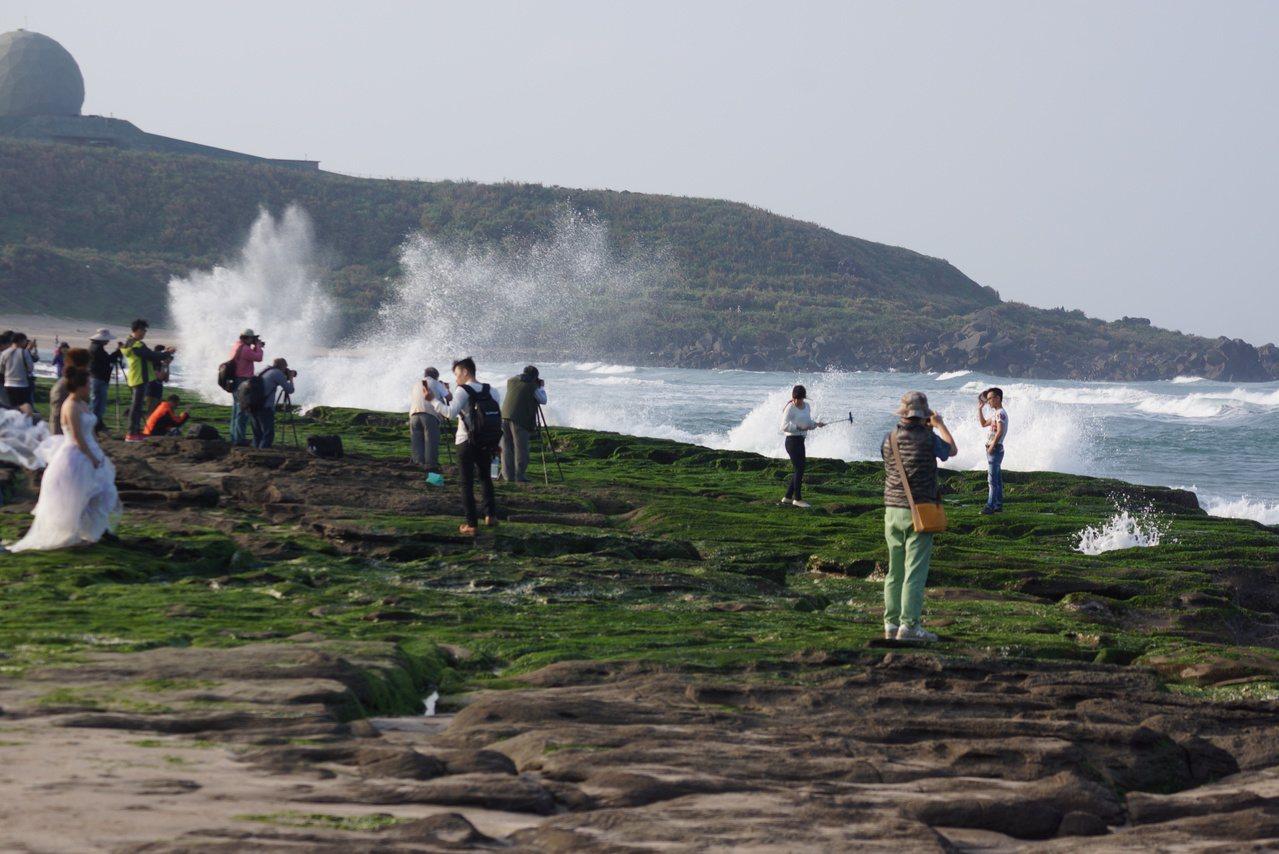 北海岸春季限定的「老梅綠石槽」是近年來超夯景點。記者曾健祐/攝影
