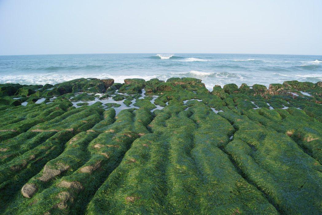 春季限定!北海岸老梅綠石槽「神秘船引道」現身