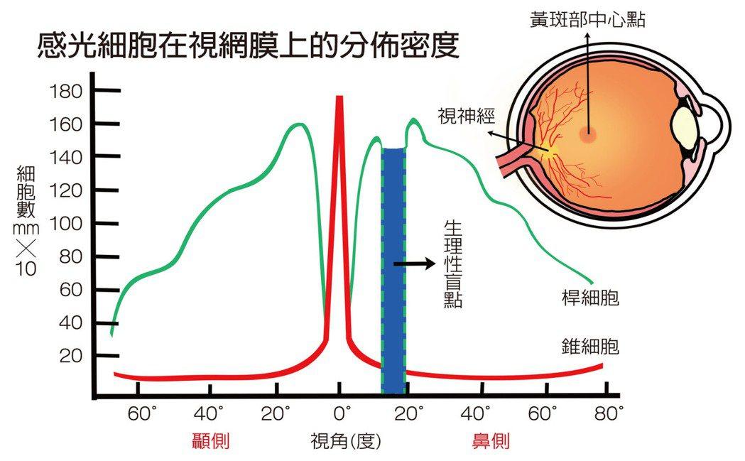 感光細胞在視網膜上的分佈密度 圖/咖哩喇賽 Pink