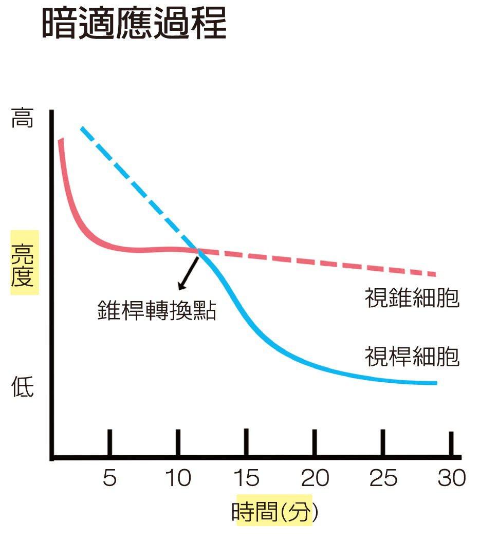 暗適應過程 圖/咖哩喇賽 Pink