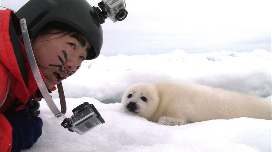 Q妹趴在冰上扮成海豹。圖/中天綜合台提供