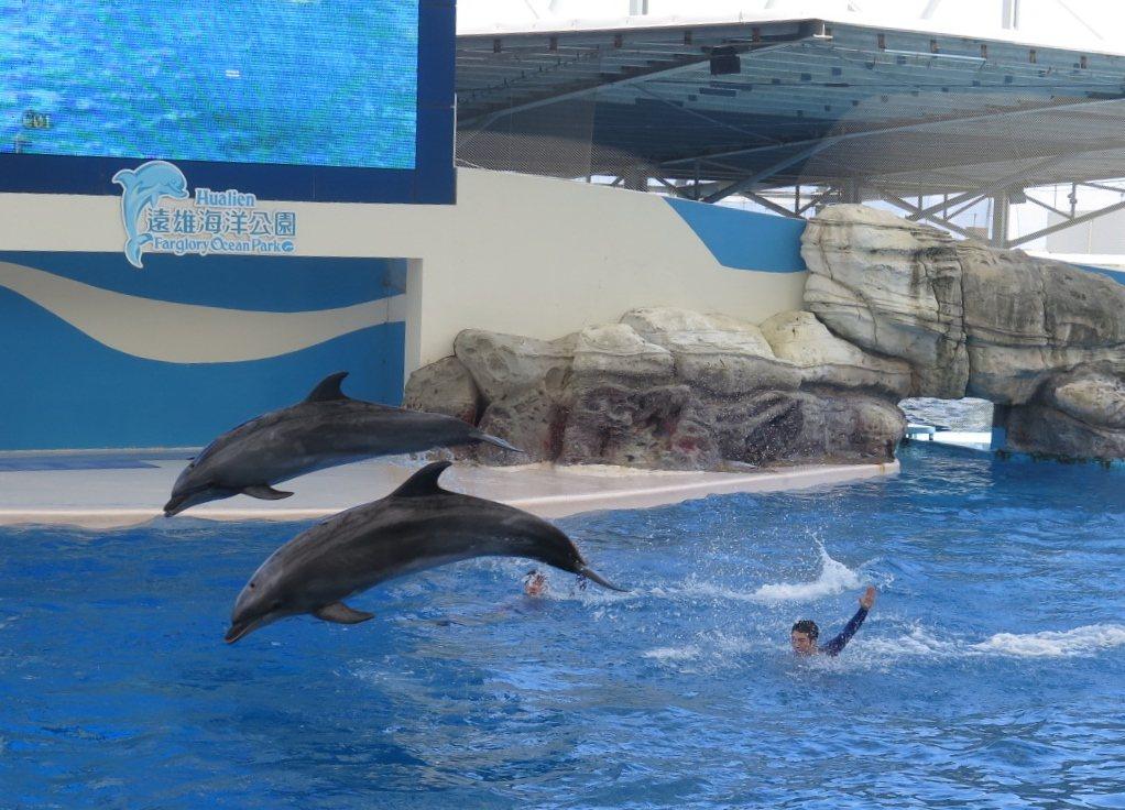 配合政府一例一休政策及體恤員工休息時數,花蓮遠雄海洋公園將從3月8日起調整營業時...