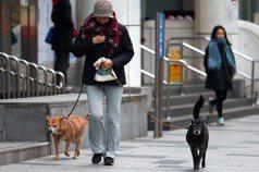 溜狗沒繫狗鍊的飼主,應該被譴責嗎?