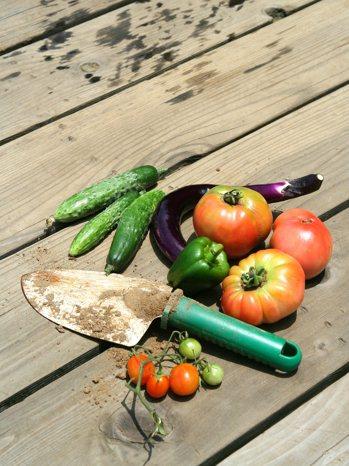 明確的生食主義是在十九世紀初期從瑞士開始發展的飲食概念,當時有些人對於工業進展造...
