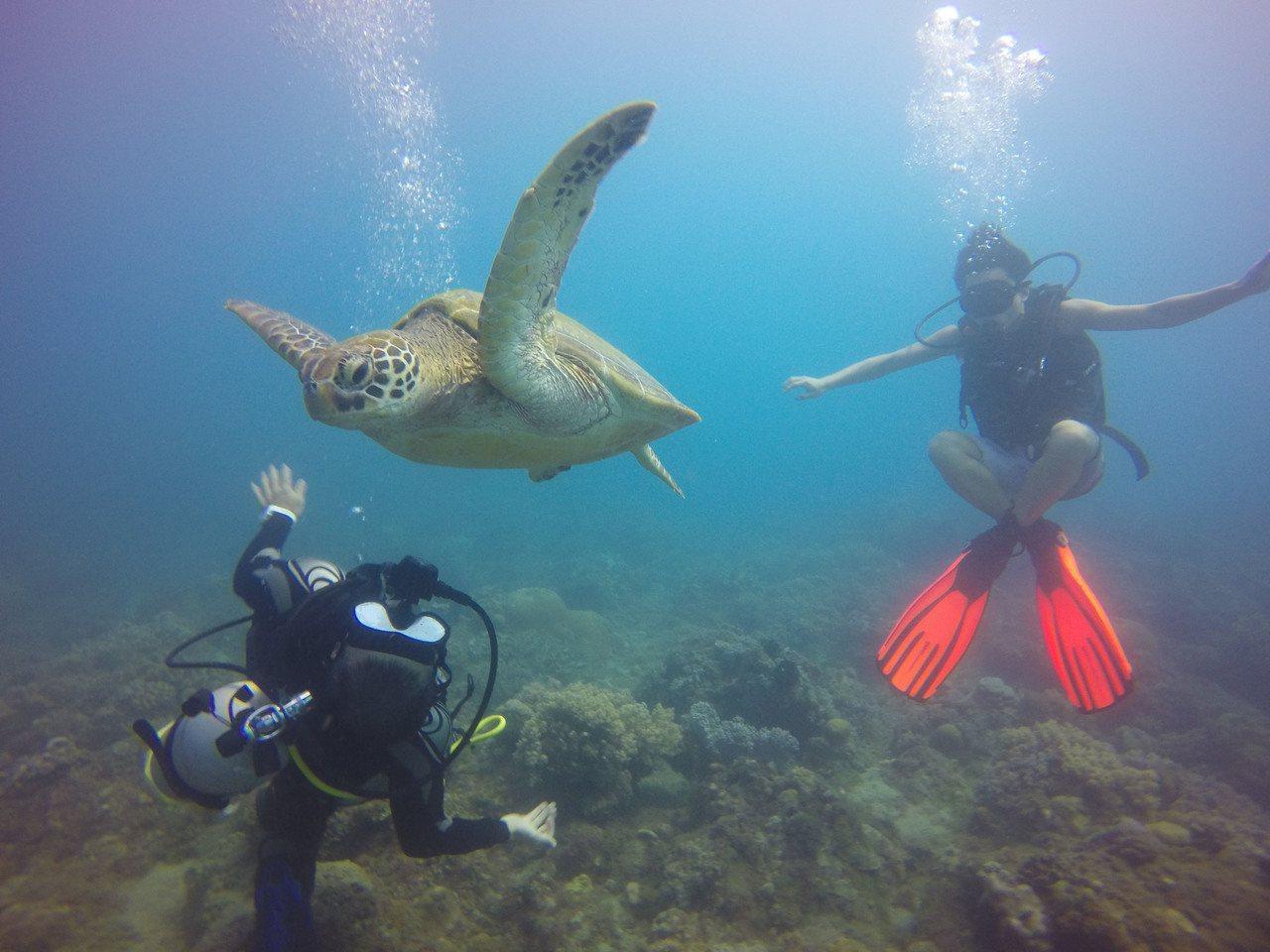 得天獨厚的環境,小琉球是許多綠蠵龜的棲息地,也吸引許多遊客造訪,體驗潛水同時和綠...