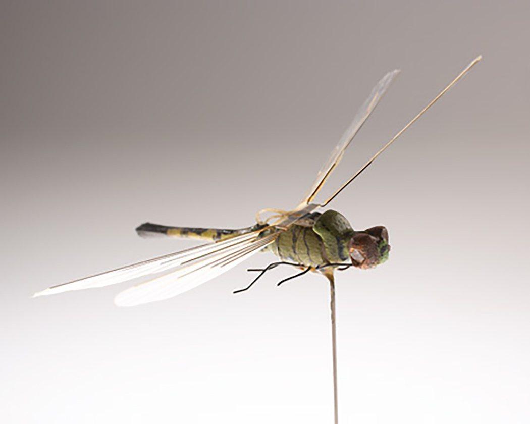 CIA蜻蜓造型昆蟲直升機。 圖/取自CIA網站