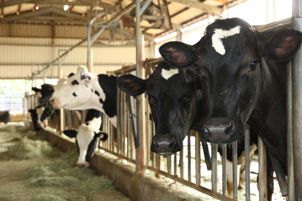 萬丹酪農生產的牛乳,與紅豆齊名。圖/蔡暉宏提供