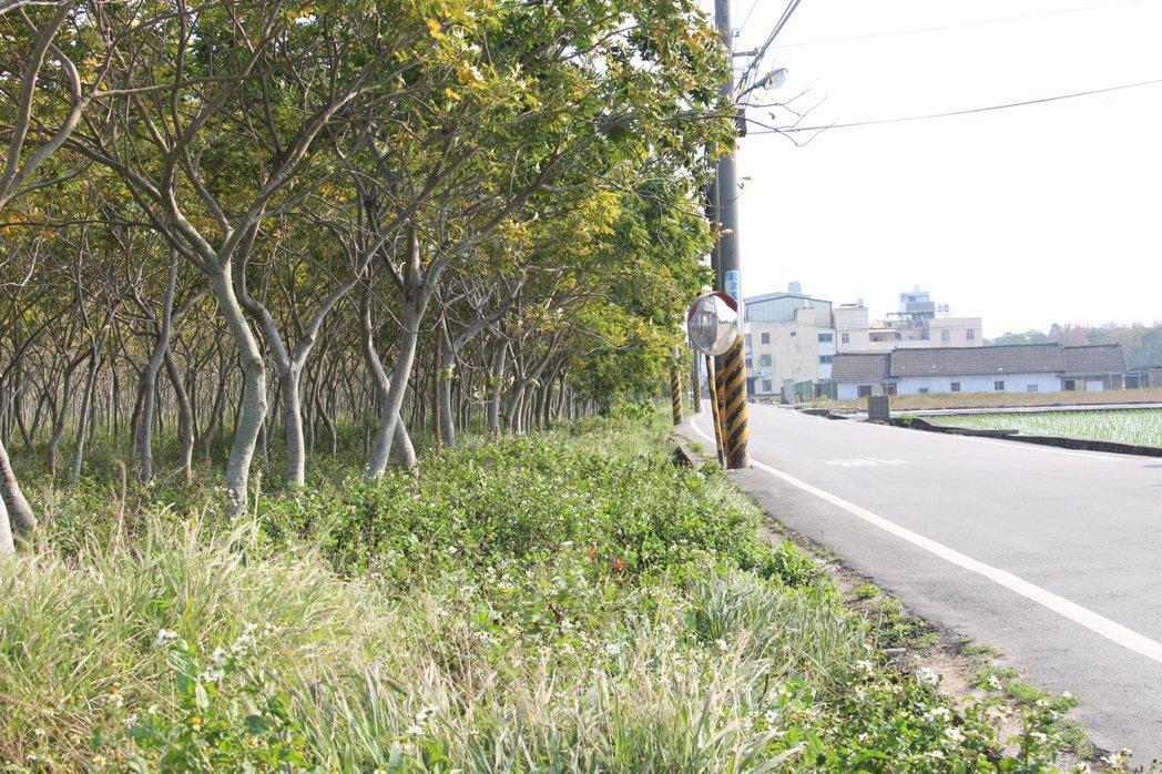 「龍貓隧道」外看來不起眼,走進樹叢則別有洞天。記者洪上元/攝影